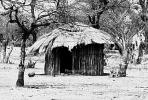 Thatched Roof Houses, Homes, Grass Roof, roundhouse, desert, buildings, trees, building, Sod
