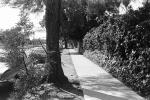 Sidewalk, 400 block of El Medio, 1970's, CLAPCD0653_043