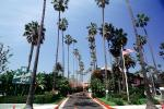 Beverly Hills Hotel, Palm Trees, CLAV04P01_03