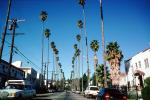 Beverly Hills, Palm Tree landmark, Cars, Street, Tall, CLAV05P02_18