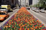 Tulips on Michigan Avenue, cars, automobiles, vehicles, CLCV05P09_16