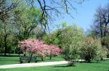 trees, path, pathway, blossom, spring, springtime, sunny, outside, outdoors, Lincoln Park, CLCV08P06_19