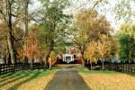 Pathway, Driveway, home, house, residence, building, trees, autumn, Lexington, CLKV01P05_02