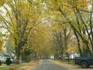 Tree lined street, road, neighborhood, City of Port Huron, autumn, CLMD01_239