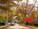 Bay Village, Tree Lined Street, Road, Sidewalk, Home, House, Single Family Dwelling Unit, Autumn, City of Huron Ohio, CLOD01_127