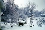 Bare Trees, Birdhouse, Snow, Snow, Ice, Cold