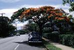 Neighborhood, Sidewalk, Tree, Parked Car, 1940s, CMLV01P01_13