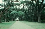 Tree lined street, path, Baton Rouge, Oak Alley Plantation, Vacherie, alley, alleyway, CMLV01P01_16