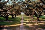 Path, Trees, Walkway, Lawn, Tunnel, Plantation, Oak Alley Plantation, Vacherie, alley, alleyway, CMLV01P09_10.1729