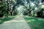 Tree lined street, road, Plantation, Building, Baton Rouge, Mansion, Antebellum Mansion, Oak Alley Plantation, Vacherie, alley, alleyway, CMLV02P02_08