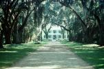 Tree lined street, road, Plantation, Building, Baton Rouge, Mansion, Antebellum Mansion, Oak Alley Plantation, Vacherie, alley, alleyway, CMLV02P02_09