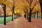 Tree lined sidewalk, Autumn, Deciduous, Twilight, Dusk, Dawn, Cottagecore, CMMV01P07_08.1821