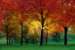 Autumn, Deciduous Trees, Fall Colors, Twilight, Dusk, Dawn, Night, Nighttime, Exterior, Outdoors, Outside, CMMV01P07_11B