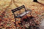 Bench, Autumn Leaves, The Hermitage, CMTV02P02_07