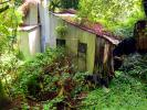 abandoned house, building, jungle, ivy, CNCD04_022