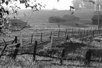 Rose Avenue, Cotati, Sonoma County, Chicken Barns, Fields, CNCPCD0656_095