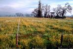 Napa Valley, Flowers, winter, CNCV01P10_02.1731