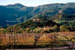 Vineyard, Home, House, Hills, Calistoga, Napa Valley, CNCV02P03_17.1731