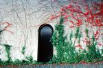 Napa Valley, Ivy, Wall, Building, Door, Entrance, CNCV02P09_09