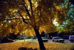 Cars, leaves, Quincy, autumn, CNCV04P07_17.1732