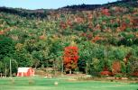 Fall Colors, Barn, Bucolic, tree, forest, deciduous, autumn, CODV01P08_14
