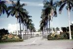 tree lined road, street, blvd., boulevard, palm trees, COFV04P13_17