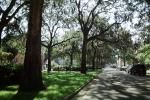 Park, shadow, trees, sidewalk, Historic Savannah, COGV01P12_04
