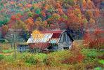 Forest, Woodlands, barn, Appalachia, near Fontana, autumn, CORV01P02_10.1738