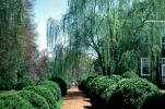 Boxwood, gardens, path, pathway, walkway, weeping willow, trees, COVV03P04_06