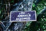 No Animals Allowed, CPHV01P06_19