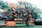 Naalehu, Southernmost community in the USA, tree, building
