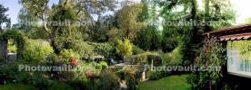 Backyard, lush, plants, jungle, Panorama, CSBD01_286