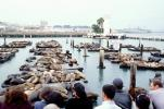Harbor Seals, Pier-39, Docks, Forbes Restaurant, CSFV16P15_11