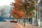 Leaves, fall colors, Autumn, Trees, Vegetation, Flora, Plants, Exterior, Outdoors, Outside, Curb, Sidewalk, Parked Car, CSFV17P04_07