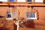 Bare tree, building, detail, CSFV18P14_03