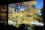 trees, frontyard, Home, House, domestic, building, Wheat Ridge