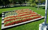 Old Glory Flag made from flowers