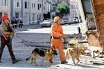 Rescuers, Dogs, German Shepard, Marina district, Loma Prieta Earthquake (1989), 1980s, DAEV01P14_07