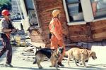 Rescuers, Dogs, German Shepard, Marina district, Loma Prieta Earthquake (1989), 1980s, DAEV01P14_08