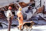 Rescuers, Dogs, German Shepard, Marina district, Loma Prieta Earthquake (1989), 1980s, DAEV01P14_10