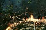 Forest Fire, DAFV03P07_06