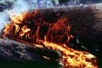 Burning Sequoia Tree, (Sequoiadendron giganteum), DAFV04P12_19