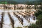 Flooded Rows of Vineyards, flood, Sonoma County, DASV01P09_07