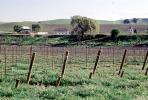 Livermore Valley, California, FAVV04P03_16