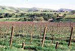 Livermore Valley, California, FAVV04P03_18