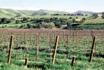 Livermore Valley, California, FAVV04P03_19