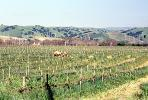 Livermore Valley, California, FAVV04P04_02