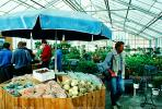 Vegetables, Glasshouse, Greenhouse, Hveragerdi, Hverager i, Iceland, FGEV01P03_01