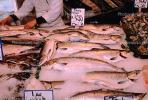 Farmers Market, Frozen Fish