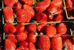 strawberry, texture, background